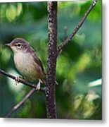 The Best Singer Of The Woods And Fields Metal Print