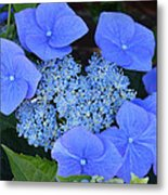 The Blue Bunch. Metal Print