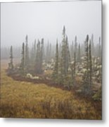 The Boreal Forest On A Foggy Day Metal Print
