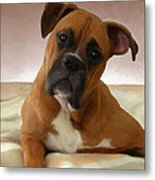 The Boxer Metal Print by Snake Jagger