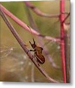 The Bug With Fireweed Seeds Metal Print
