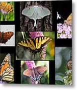 The Butterfly Collection Metal Print