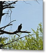 The Buzzard Is Two Faced Metal Print
