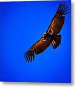 The California Condor Metal Print