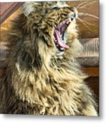 The Cat Who Loves To Sing Metal Print