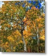 The Colors Of The Aspen Forest Metal Print