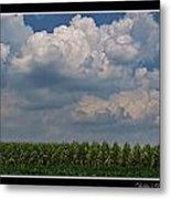 The Corn Is Thirsty Metal Print