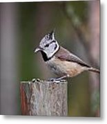 The Crested Tit Having Lunch Metal Print