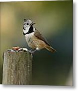 The Crested Tit Metal Print