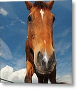 The Curious Horse Metal Print