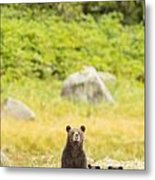 The Curious Mom Metal Print by Tim Grams