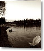 The Disinterested Goose And I  Metal Print
