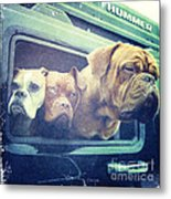 The Dog Taxi Is A Hummer Metal Print by Nina Prommer