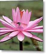 The Dragonfly And The Pink Water Lily Metal Print