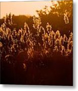 The Dunes- Fire Island Metal Print