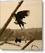 The Eagle Flies With The Crow Metal Print