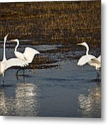 The Egrets Metal Print