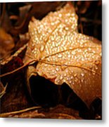 The Enlightened Maple Leaf Metal Print by LeeAnn McLaneGoetz McLaneGoetzStudioLLCcom