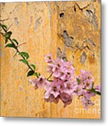 The Escaping Bougainvillea Metal Print