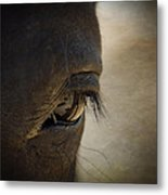 The Eyes Are The Window To The Soul Metal Print