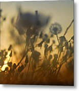 The Fire Of The Sun Metal Print