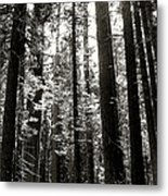 The Forest Through The Trees Metal Print
