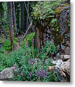 The Forest Trail Metal Print
