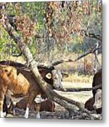 The Fork In The Tree Metal Print