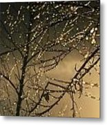 The Frozen Branches Of A Small Birch Metal Print