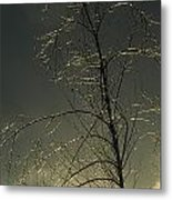 The Frozen Branches Of A Small Tree Metal Print