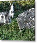 The Goat And The Stone Metal Print
