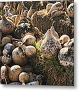 The Gourd Family Metal Print