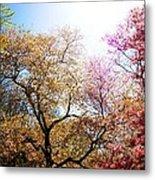 The Grandest Of Dreams - Cherry Blossoms - Brooklyn Botanic Garden Metal Print