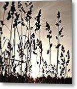 The Grass At Sunset Metal Print