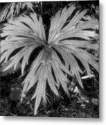 The Great Leaf Metal Print