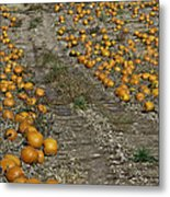 The Great Pumpkin Patch Trail Metal Print