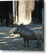 The Handsome Warthog Metal Print