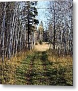 The Happy Path Metal Print