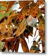 The Hickory In Autumn 2 Metal Print