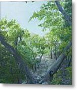 The Hiking Trail Metal Print