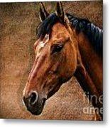 The Horse Portrait Metal Print