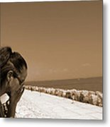 The Lady And The Sea Metal Print