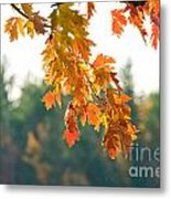 The Last Bit Of Fall Metal Print