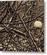 The Last Little Apple On The Tree Metal Print
