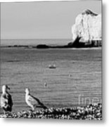 The Lazy Albatrosses Metal Print
