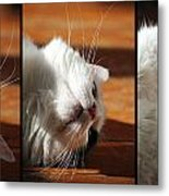 The Lazy Cat Metal Print