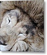 The Lion Sleeps Metal Print