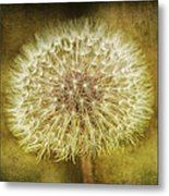 The Lion's Tooth Metal Print