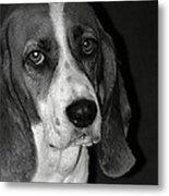 The Little Dog Metal Print