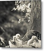 The Little Ones Rest Metal Print